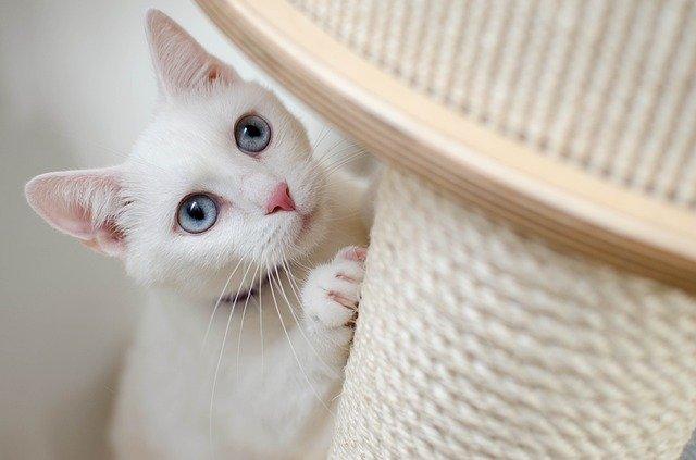 Choisir un arbre à chat pour le confort de son chat