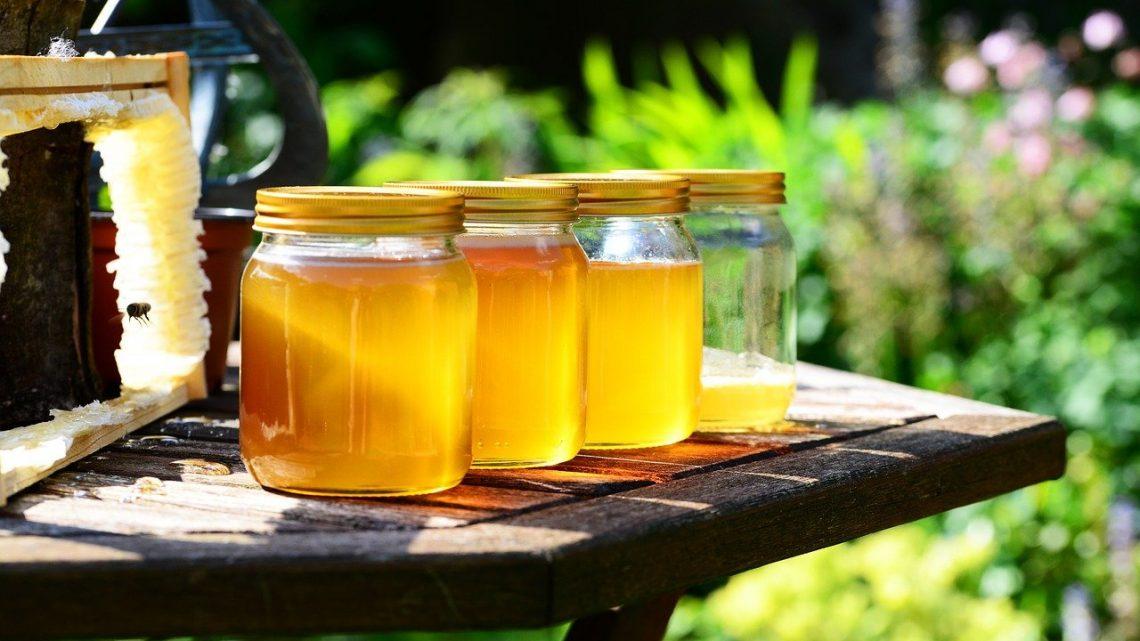 Miel d'euphorbe : plus un médicament naturel que de la nourriture