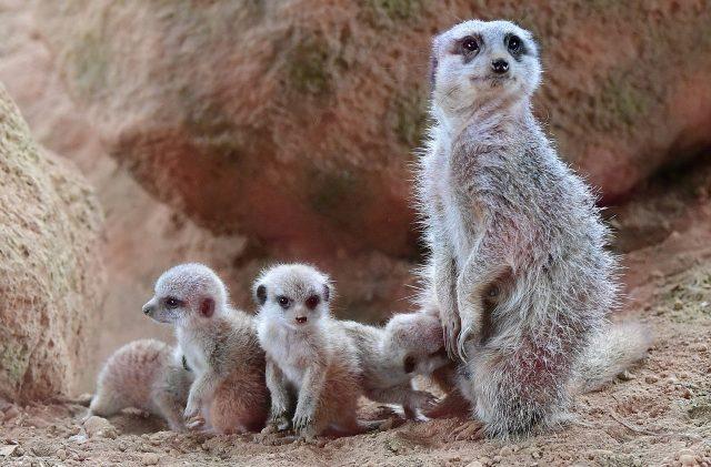 Tout ce que vous devez savoir pour visiter le zoo à lyon